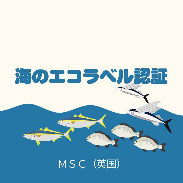 wi13_msc